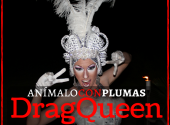 show de drag queen - animación para despedidas